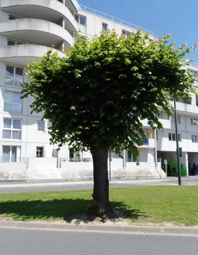 arbrenjuin1-1.jpg