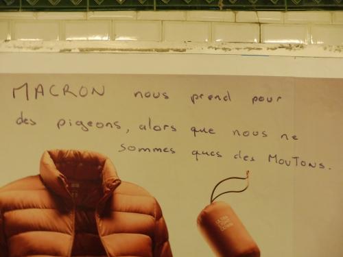 pigeonsmoutons.JPG