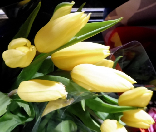 tulipesjaunes2.jpg